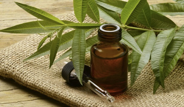 tea-tree-oil-prevents-cancer