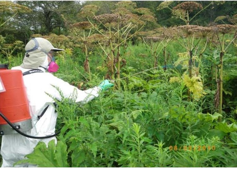 applying_systemic_herbicides