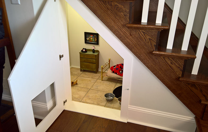 room-for-chihuahua-dog-3