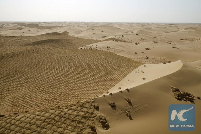 china-is-trying-to-turn-parts-of-the-desert-green-1-1