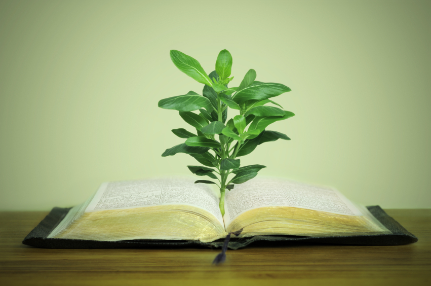 Old book (bible) with plant, on green background