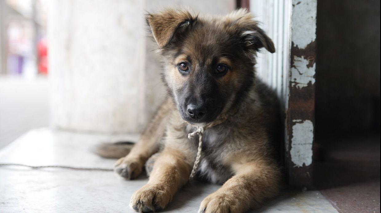zayıf hasta sokak köpeği ile ilgili görsel sonucu