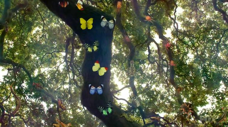 Ağaçlarla akraba olduğumuzu biliyor musunuz?