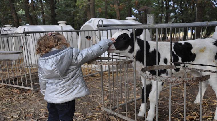 Gündönümü Çiftliği'ne destek zamanı