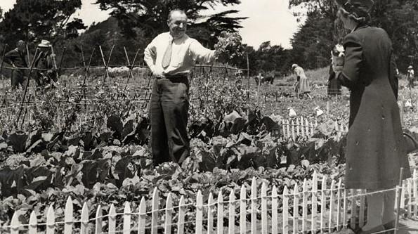 Her derde derman: Topluluk bahçeleri