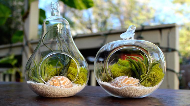 Kendi minik ekosisteminizi yaratın: Terrarium nasıl yapılır?