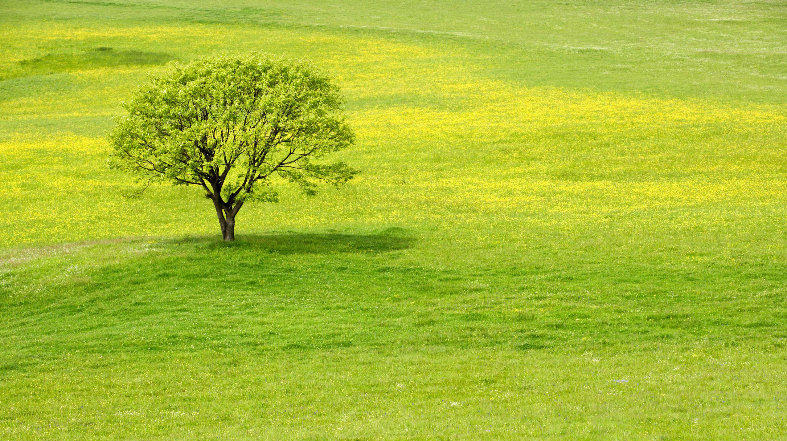 Gezegenin mükemmeliğini kanıtlayan 35 gerçek