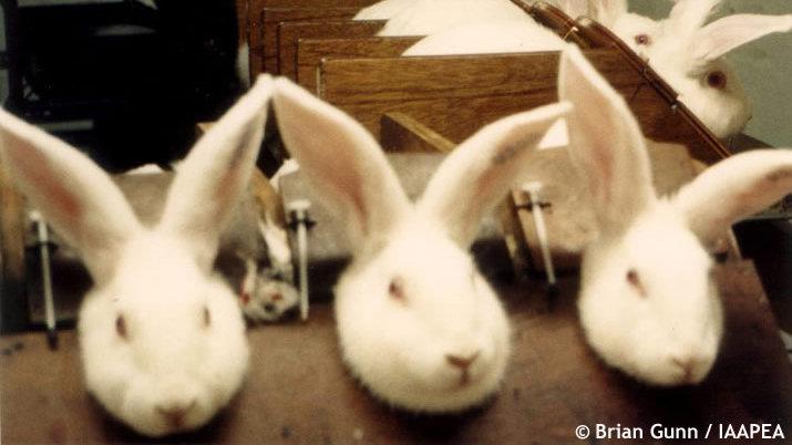 Hindistan'dan gol haberi: Hayvan deneyleri yasaklandı