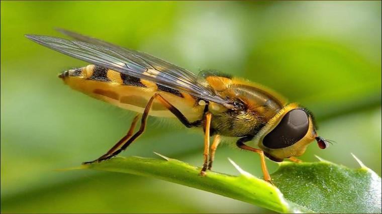 Arı sokmasına ev yapımı, doğal reçeteler