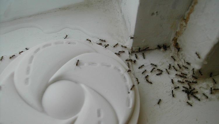 Derdiniz evdeki karıncalar mı?