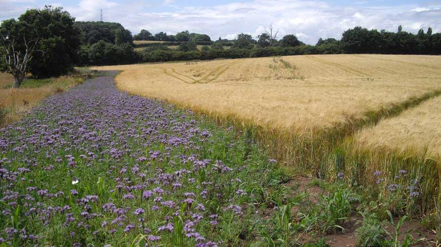Tarımın doğa dostu olması için organik olması gerekli mi?