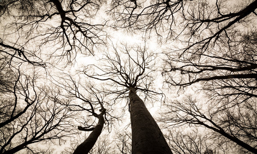 Ağaçların mantarlar ile beraber kurduğu doğal internet: Wood Wide Web