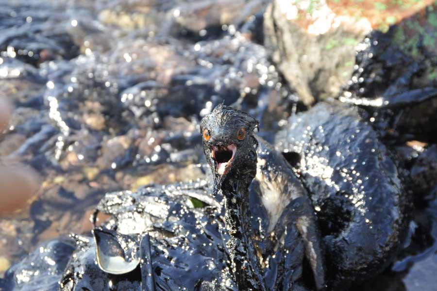 Kocaeli'de felaket: 300 ton petrol körfeze sızdı, sorumluları hâlâ açıklanmadı