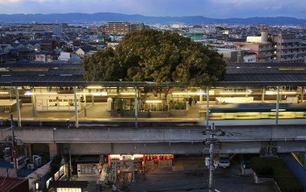 700 yıllık ağacı kesmemek için yeniden planlanan Japonya'daki istasyonun hikayesi
