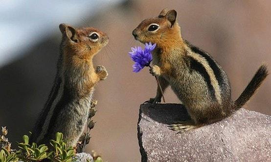 Hem doğanın, hem de sevdiklerinizin kalbini kazanacak sevgililer günü hediyeleri