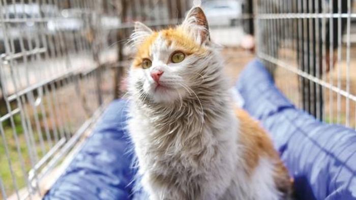 Suriye'de savaşın ortasından kurtarılan kedi yeni yuvasına kavuştu