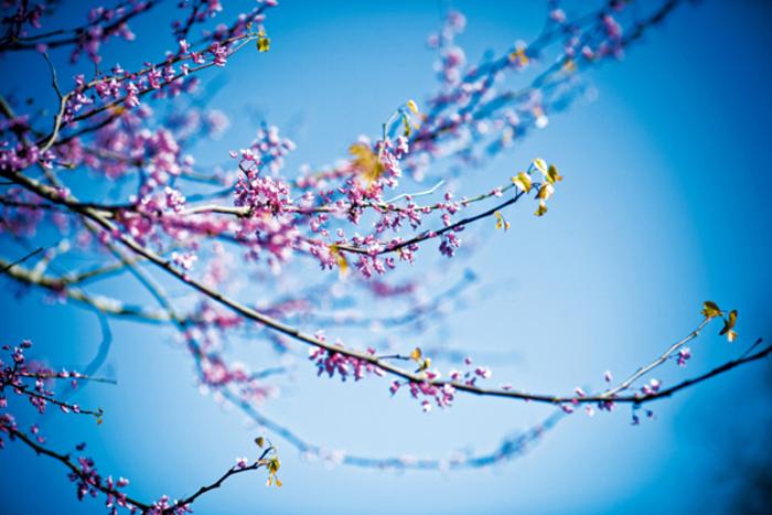 Şehirde karşımıza çıkacak, baharı müjdeleyen 9 çiçek