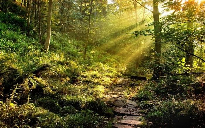 Bir ağacın çevresel, toplumsal ve sosyal 15 faydası