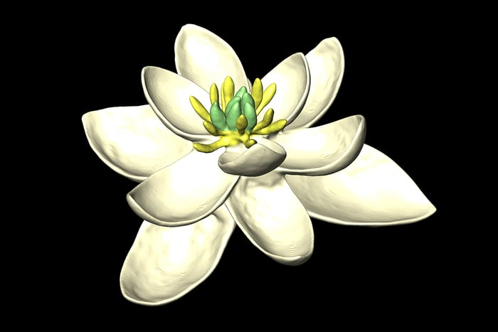 140 milyon yıl önce dünya üzerinde açan ilk çiçek ile tanışın
