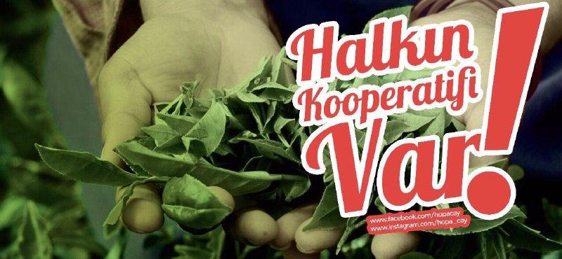 Hopa Kooperatifi'nden Türkiye'nin her yerine kargoyla çay: Halk üretsin, halk kazansın