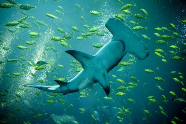 Köpekbalığından daha ölümcül 11 hayvan