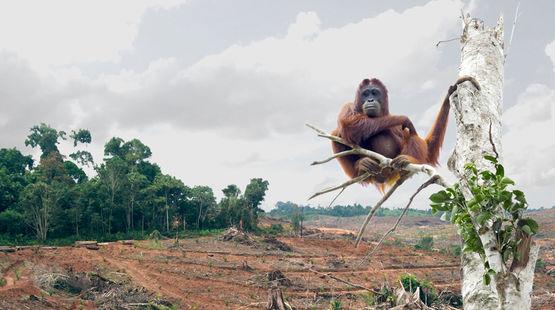 Biyoçeşitlilik İnsan Çağı ile beraber yok oluyor: Son 50 yılda tüm hayvanların yarısı yok oldu
