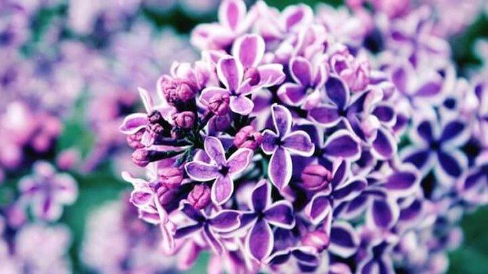 Mutfaklarda rengârenk ve mis kokulu bir açılım: Yenebilen 11 çiçek