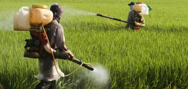 Uzmanlar Monsanto'nun otları öldüren kimyasalının bal arılarına da zarar verdiğini açıkladı