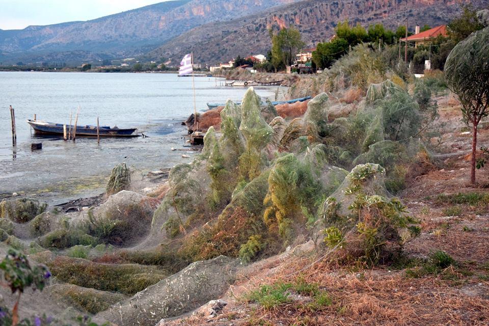 Yunanistan'daki bu kasaba örümcek istilasına uğradı
