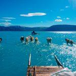 Grönland'da bir günde iki milyar tonluk buz eridi, sonucu bu fotoğraf oldu
