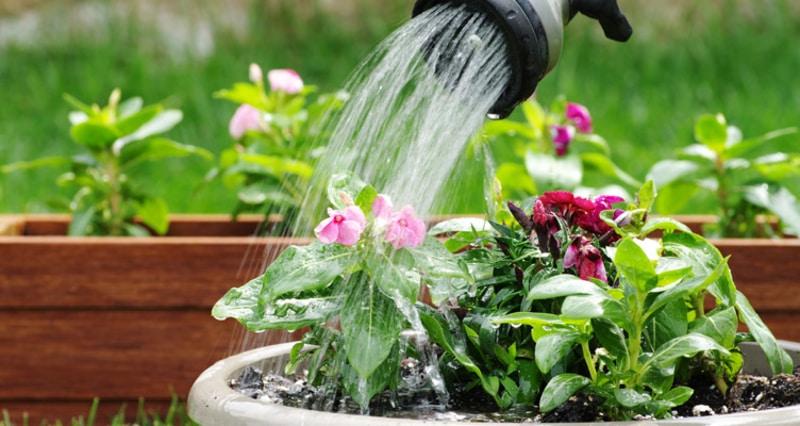 Evdeki bitkilerimizi nasıl sulamalıyız? – Yeşilist | Herkes için yeşil