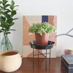 Evdeki bitkilerimizi nasıl sulamalıyız?