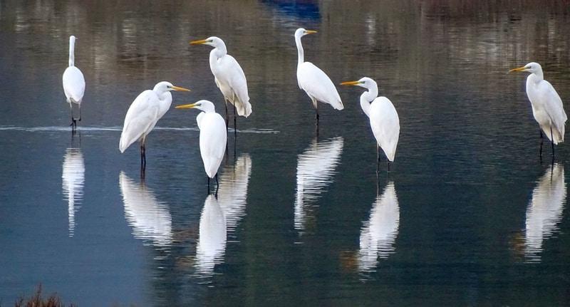 Çeşme'de bir vaha: Alaçatı Kuşları