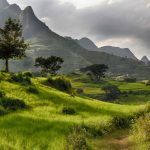 Etiyopya'da 12 saatte 350 milyon ağaç dikildi, hedef 6 milyar ağaç