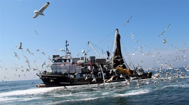 Aşırı avlanma ve iklim değişikliği balık türlerini yok ediyor