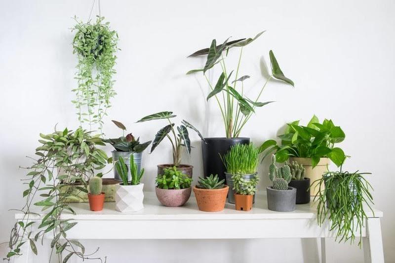 Evdeki bitkileri sonbahara hazırlamanın 6 yolu