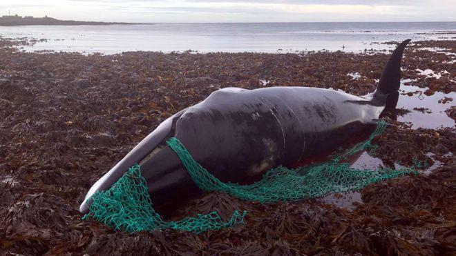 okyanuslarda bulunan büyük plastik atıklar arasında birinci sırada