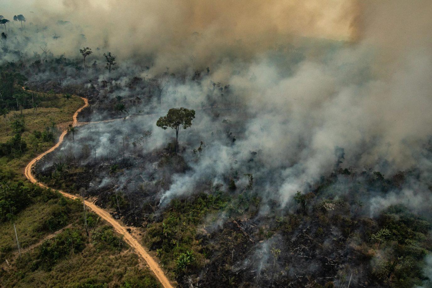 Amazon'daki ormansızlaşma son 10 yılın en yüksek seviyesinde