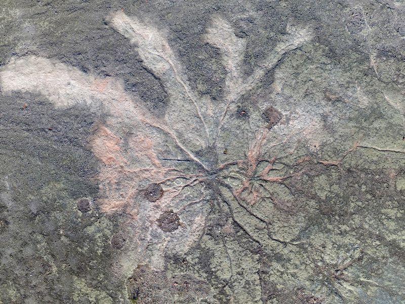 385 milyon yıl öncesine ait ağaç fosilleri bulundu