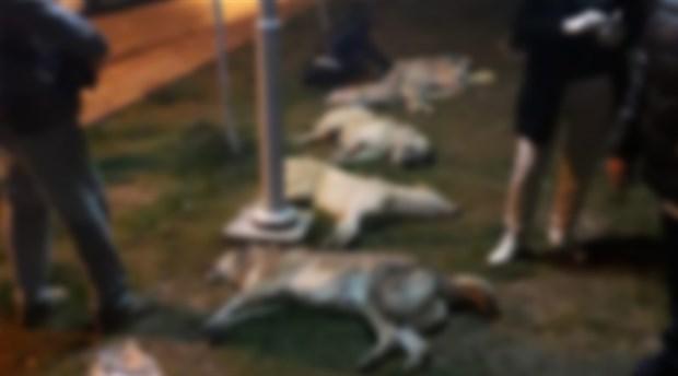 Batıkent'te 16 köpeği öldüren katillere 10'ar yıl hapis cezası verildi