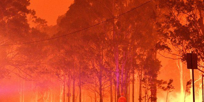 Avustralya yangınlarının ardından soyu tükenme tehlikesi ile karşı karşıya kalan 4 hayvan türü
