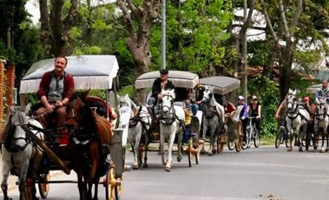 Adalar'daki atları İBB satın alıyor