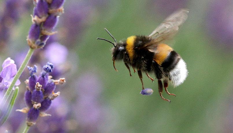 Arı popülasyonlarında ciddi düşüşe sebep olan iklim kaosu yaklaşıyor
