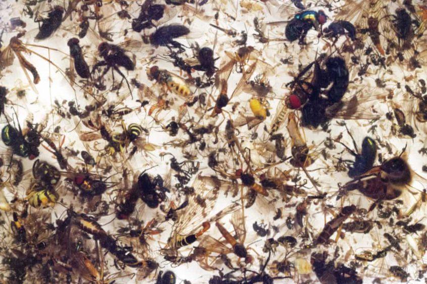 Bilim insanları uyardı: İnsanların ve böceklerin kaderi birbirine bağlı