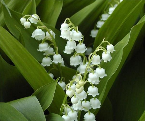 Nisan ayında balkon bahçeciliği – Yeşilist | Herkes için yeşil