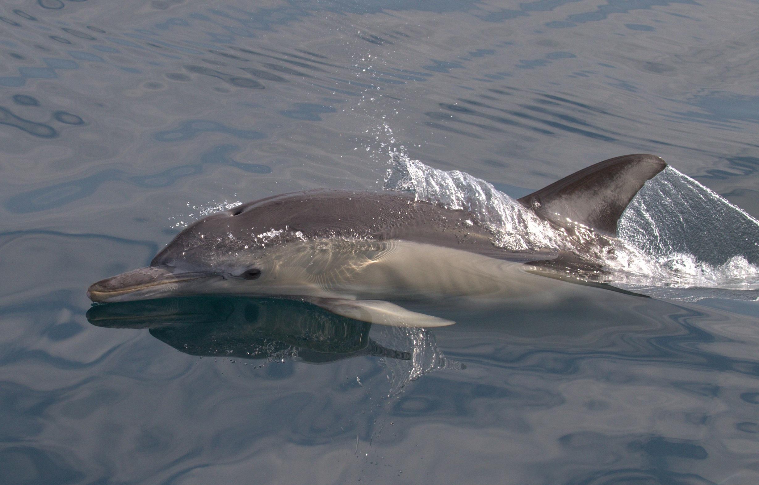 Yunuslar değil insanlar balık stoklarının azalmasına sebep