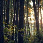 Çevresel sürdürülebilirlik alanında dijital dönüşüm fonu