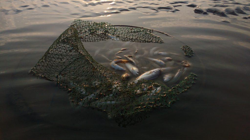 Seaspiracy filminin düşündürdüğü 6 çarpıcı gerçek – Yeşilist | Herkes için yeşil