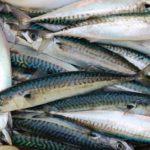 Hem küçük balıkçıyı hem de denizlerin bereketini nasıl koruruz?