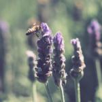 Arıları korumak için neler yapabiliriz?